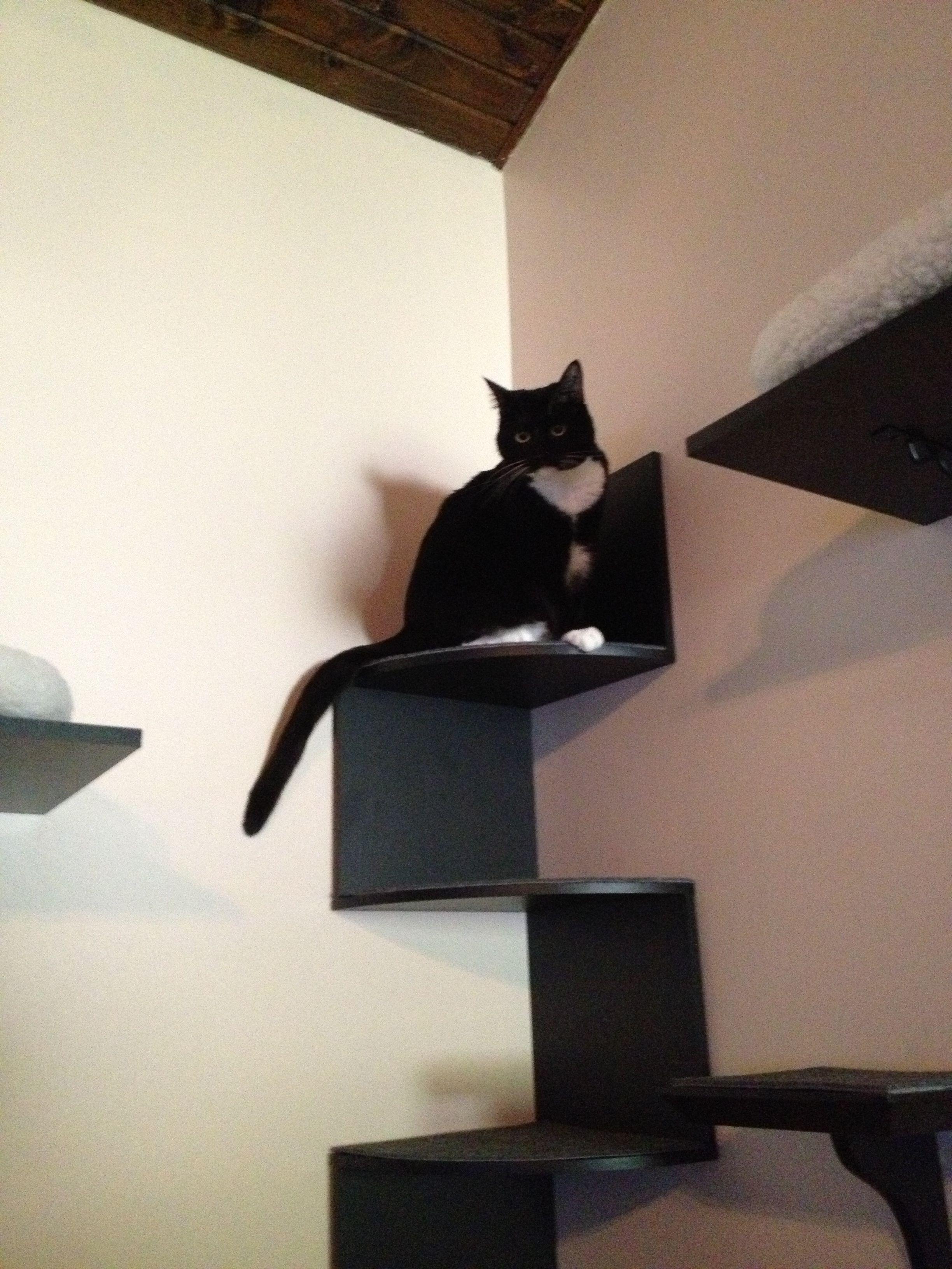 Diy cat wallcat shelves cats catshelves cat wall