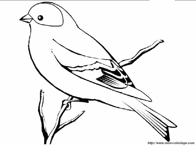 Album De Dibujos De Aves Con Su Nombre Bird Coloring Pages Coloring Pages Bird Drawings