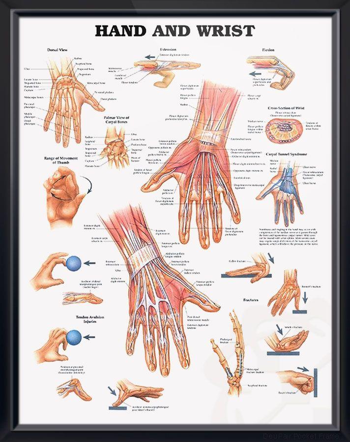Hand and Wrist Chart 20x26 | MY HEALTH | Pinterest | Carpal tunnel ...