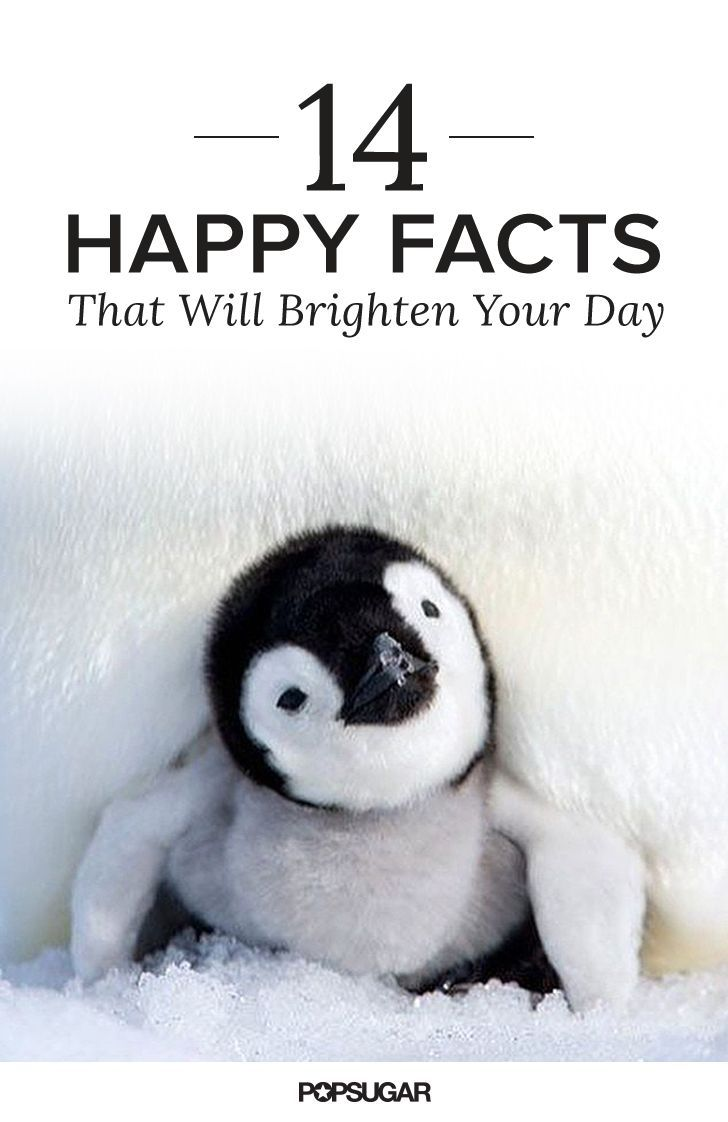 These 14 Happy Facts Will Brighten Your Entire Day | Stress