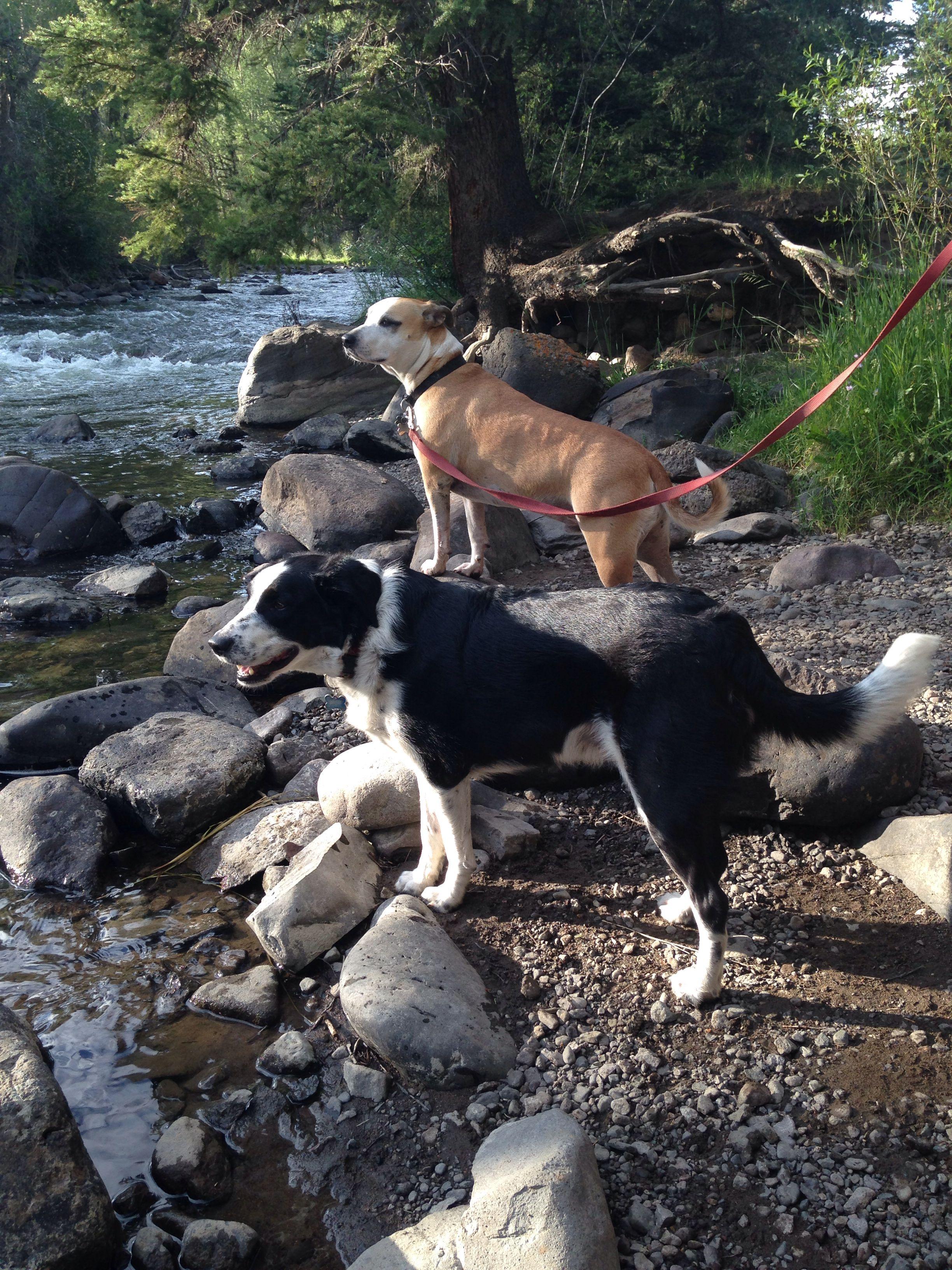 At the Conejos River, Colorado