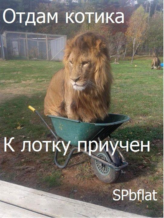 #котики