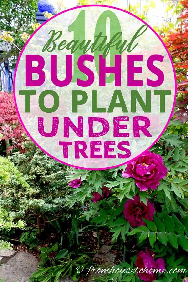 Shade Loving Shrubs 15 Beautiful Bushes To Plant Under Trees Gardening From House To Home Plants Under Trees Shade Loving Shrubs Shade Shrubs