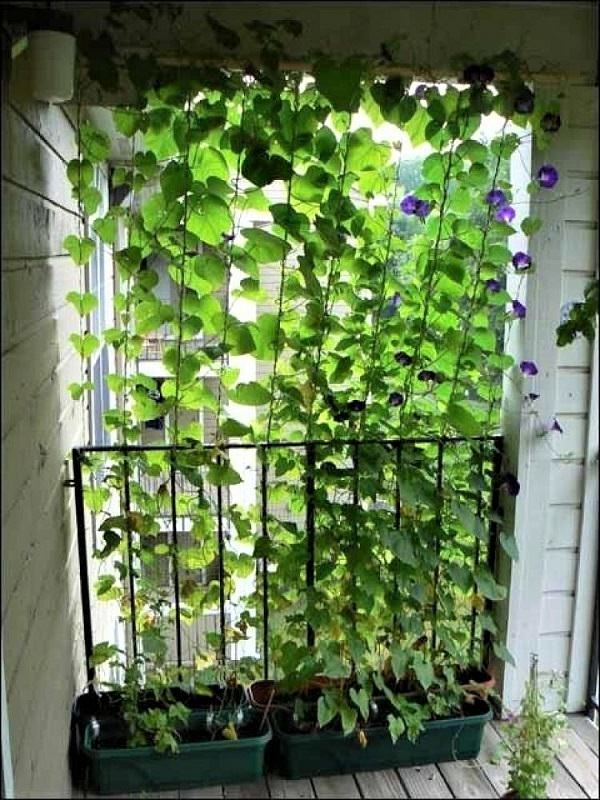 8 Practical Balcony Privacy Ideas #balconyprivacy