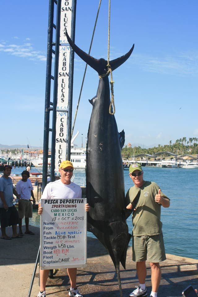 check out this stunning 650 lb blue marlin taken by angler