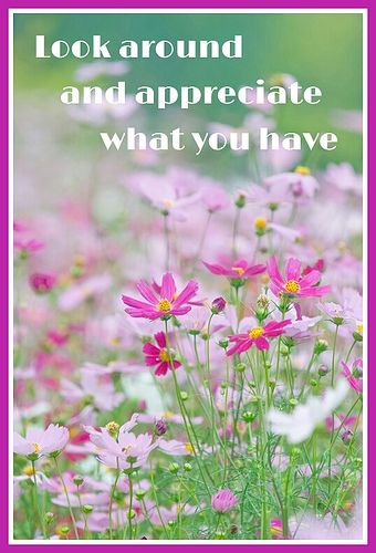 Quote Cosmos Flowers Beautiful Flowers Planting Flowers