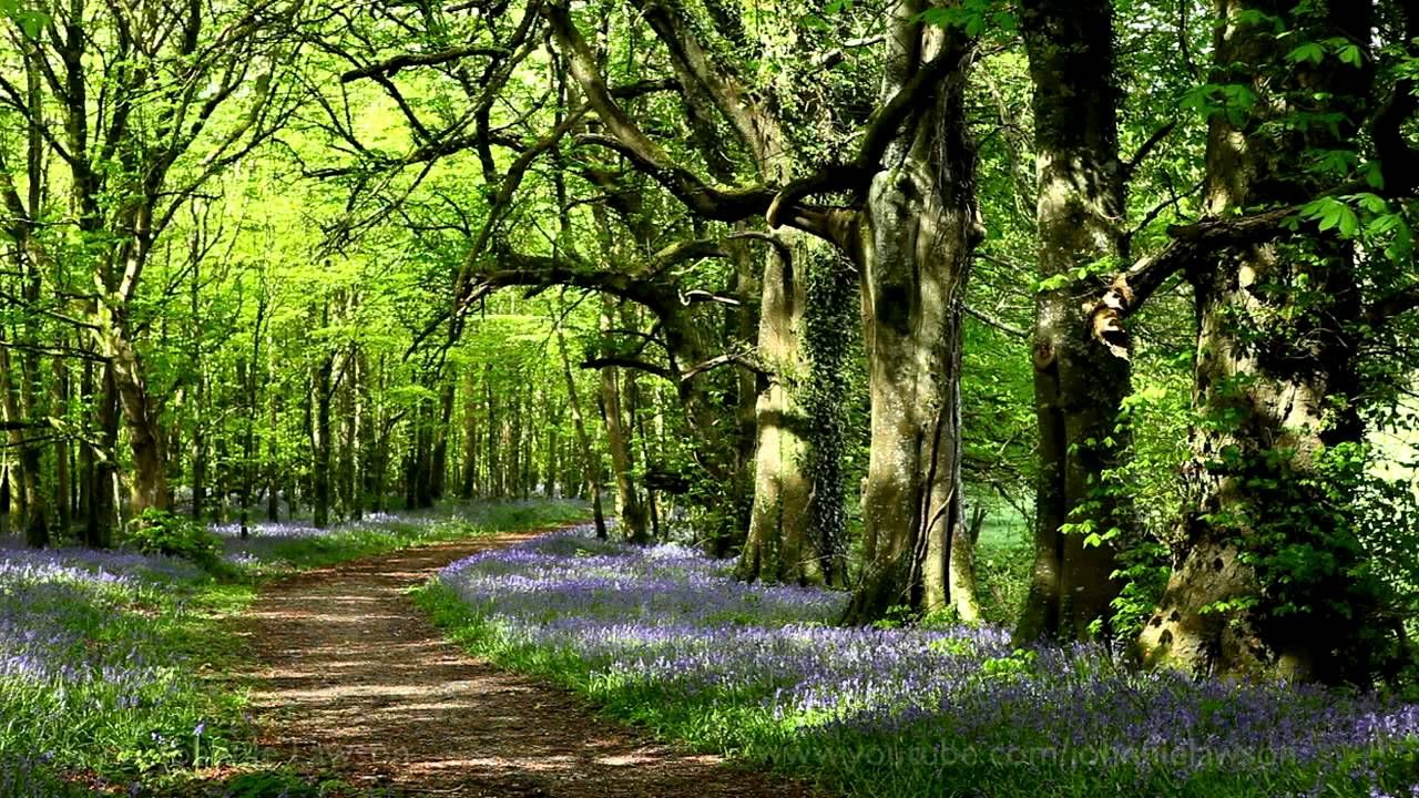 8 Hour Nature Sounds Relaxation Meditation Birdsong Birds Singing Forest Nature Sounds Forest Sounds Nature