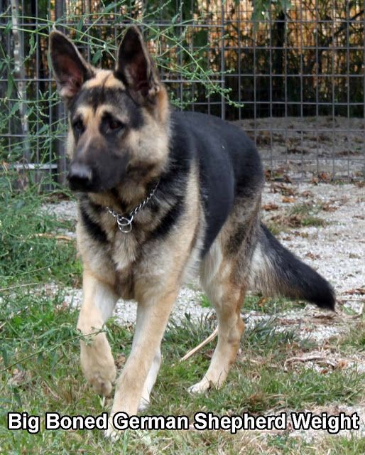 Homemade Raw Dog Food Diet Plan Recipes German Shepherd Dogs