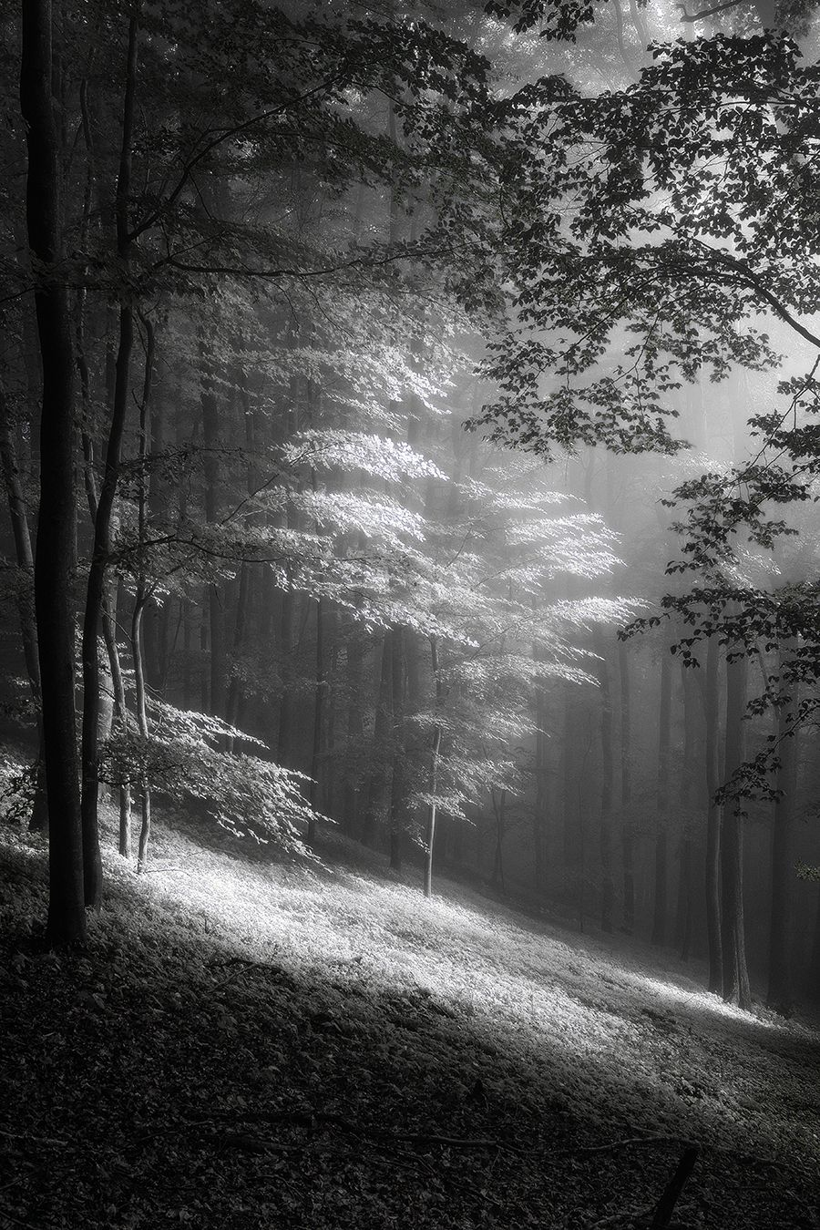 Fog In June By Fremdart In 2020 With Images Landscape Photography Black And White Landscape Nature Photography Trees