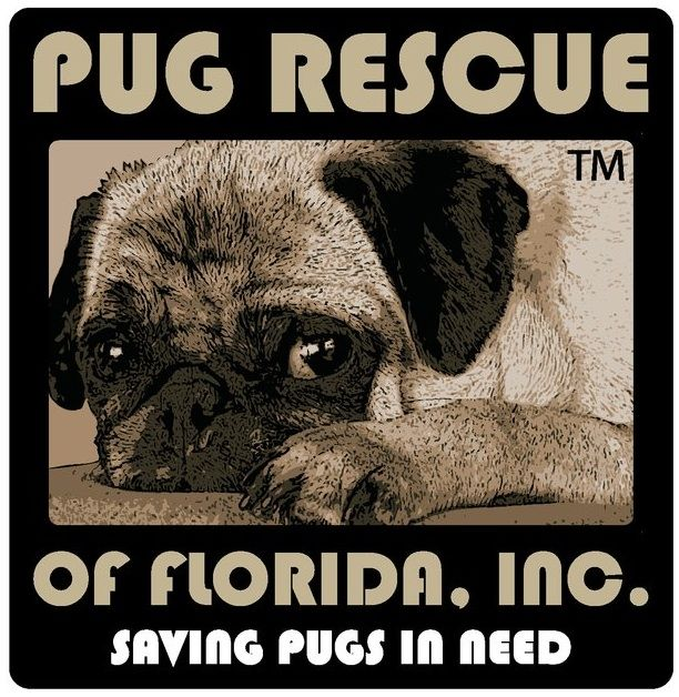 Pug Rescue Of Florida Saves Pugs In Need Read More About This