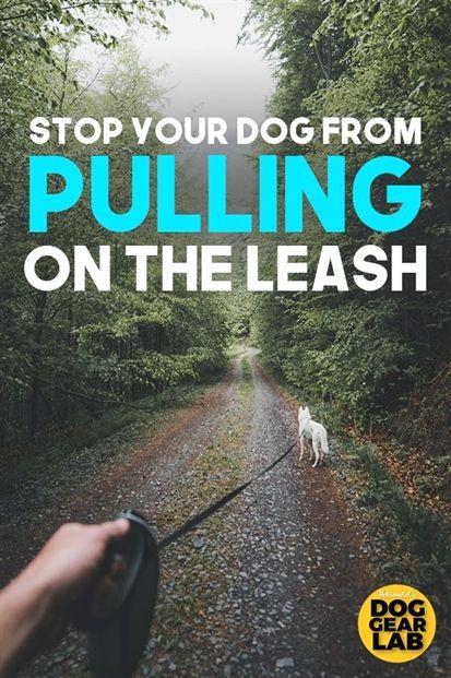 Dog Training Fayetteville Nc Dog Training Whip Stick Dog