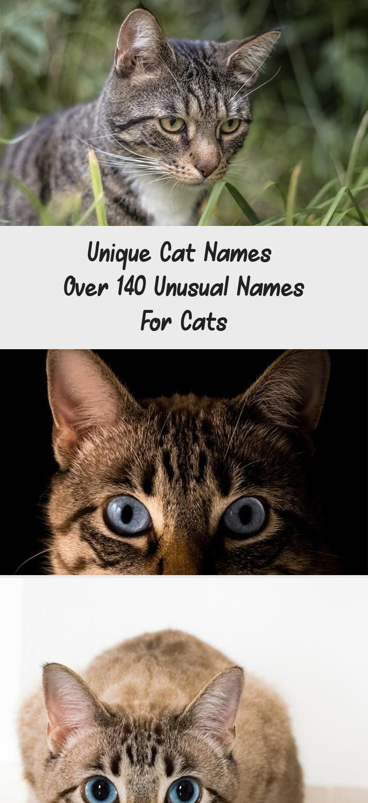 My Blog En Blog in 2020 Grey cat names, Cute cat names