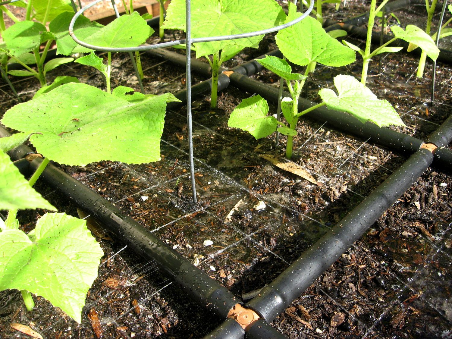 Superior The Garden Grid Irrigation System. Evenly Partitions Your Garden And Waters  At The Base Of