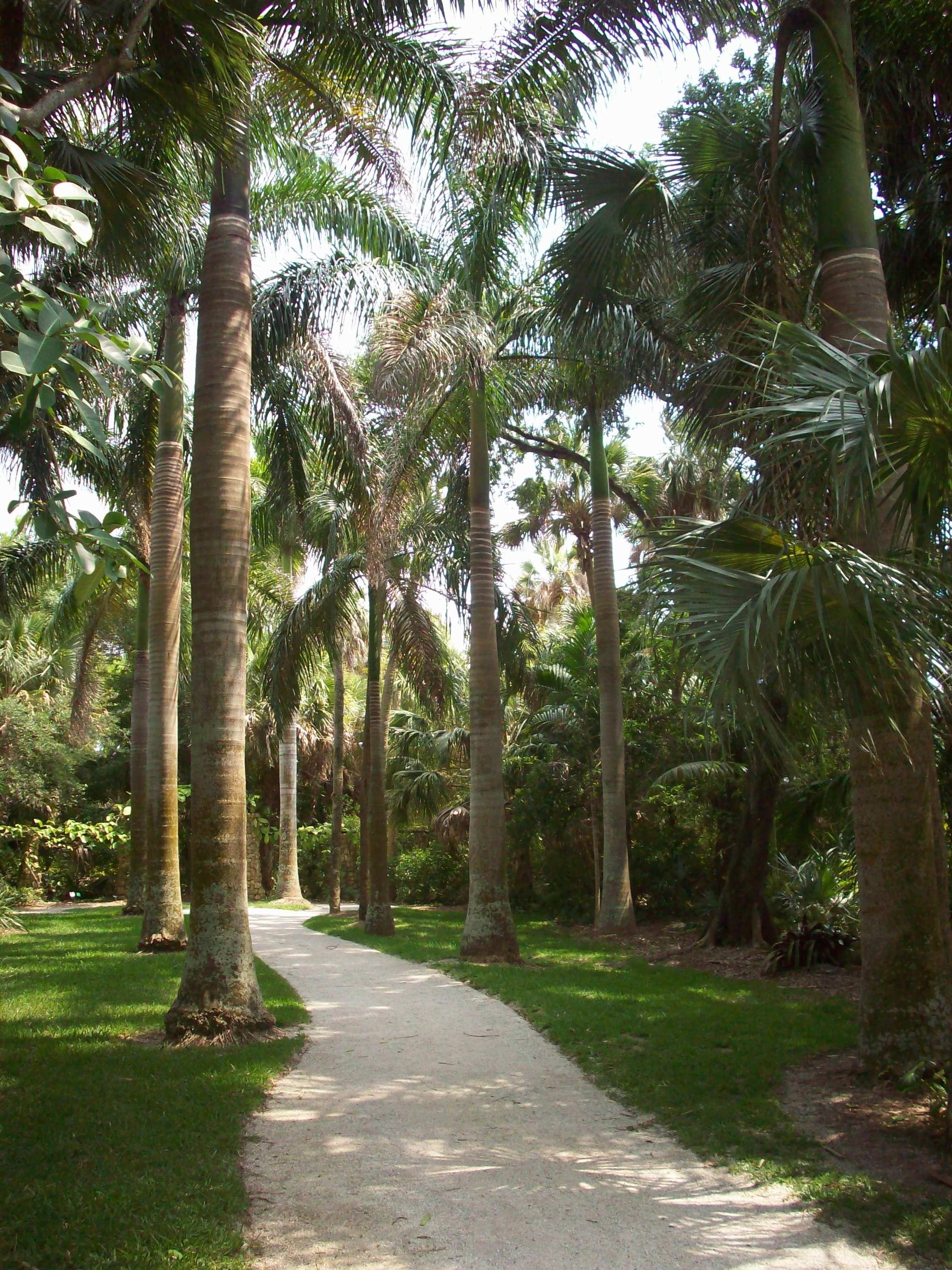 Strolling mckee botanical gardens vero beach fl - Mckee botanical gardens vero beach ...