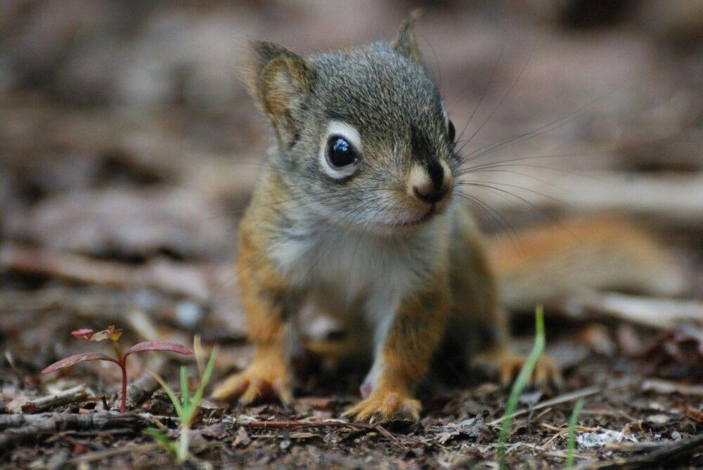 Baby squirrel squirrel animals