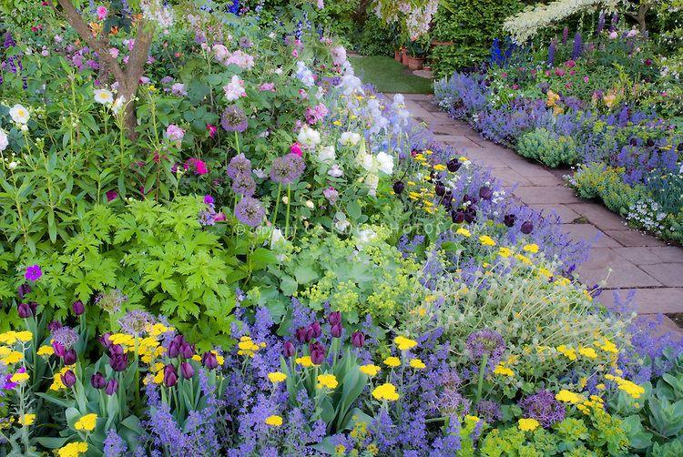 17 Best 1000 images about Blue Garden on Pinterest Delphiniums Sun