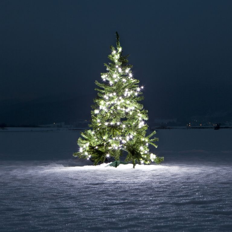 The History of the Christmas Tree Goes Back Farther Than ...