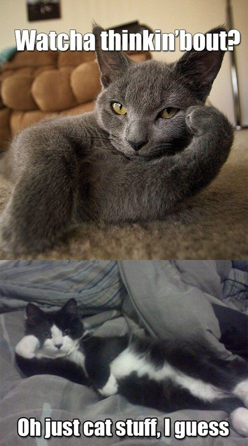 I Can Has Cheezburger? - Page 9 - Lolcats n Funny Pictures - funny pictures - Cheezburger