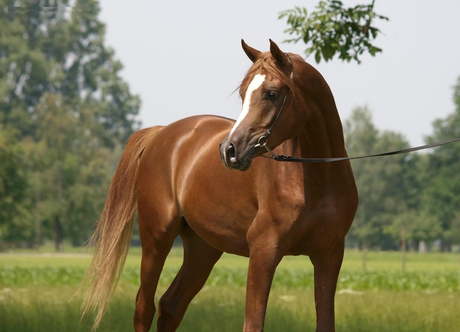 Fantastic Wallpaper Horse Windows - 497bcd0df4a5d0a7c1e048b38a1e41ff  Photograph_85837.jpg