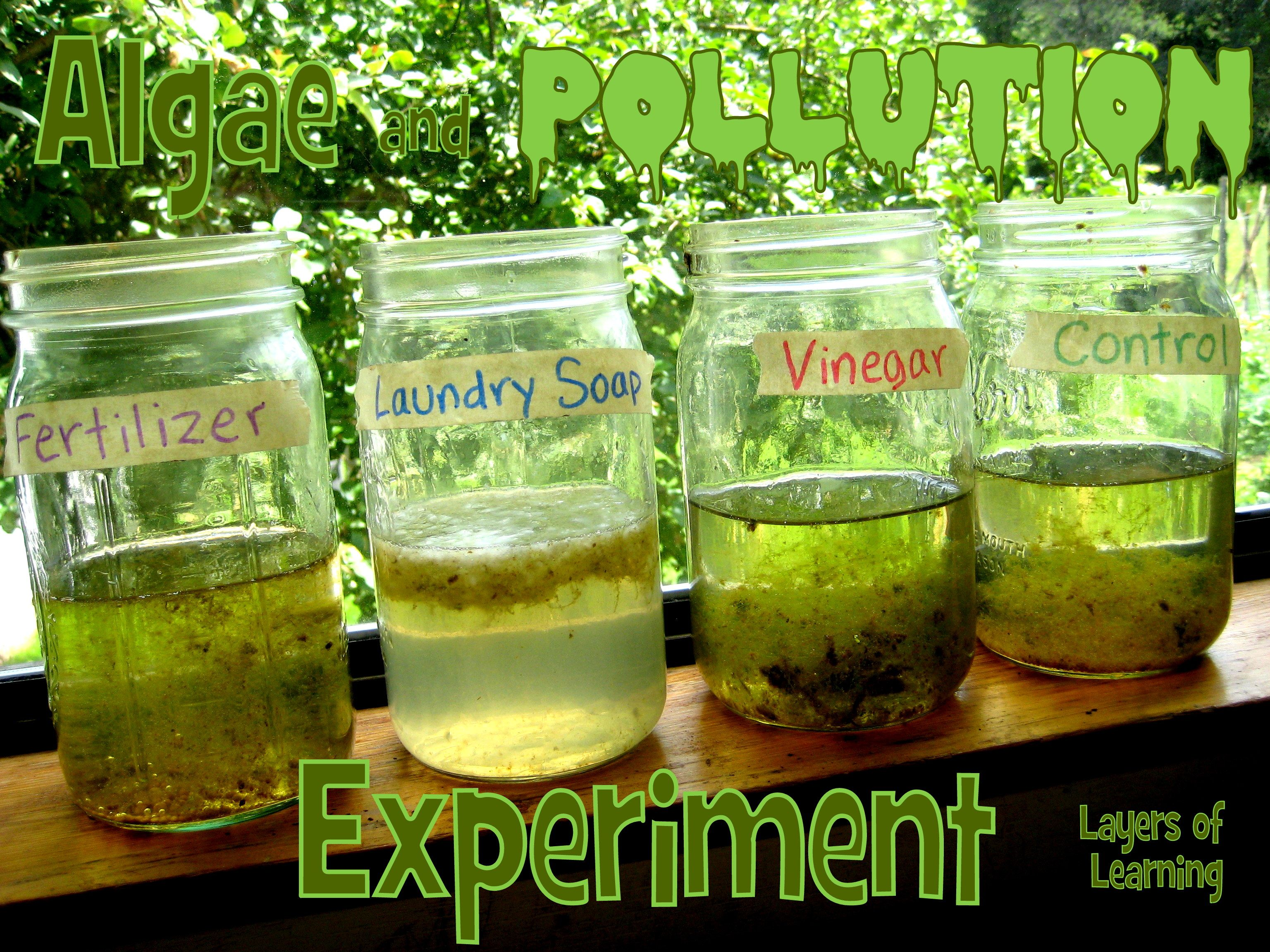 Algae And Pollution Environmental Science Projects