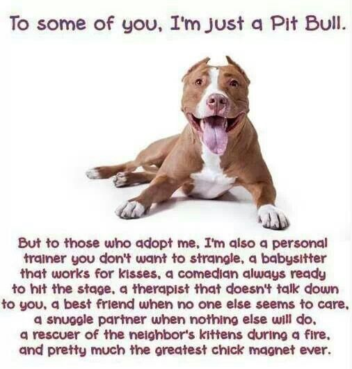 Love This! Exactly How I Felt About My Bailey Boo