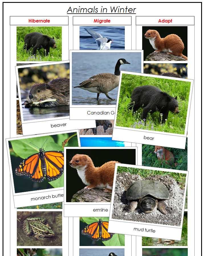 Animals in Winter Animal mashups, Which animals