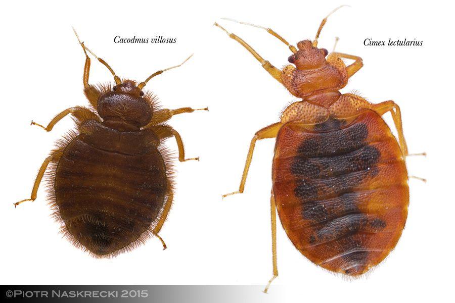 Mozambique Diary Snug As A Bug Mozambique Snug Bugs