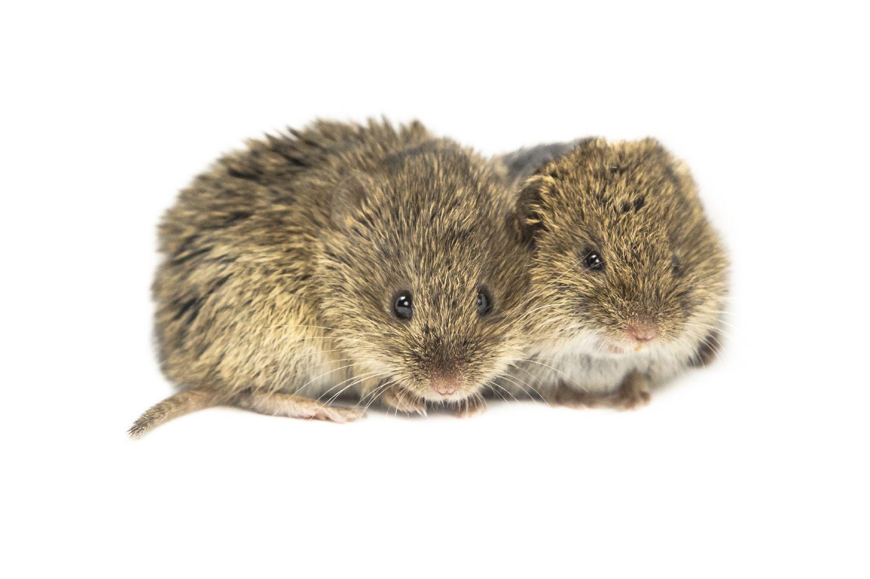Animal News | Animals, Forest animals, Animal categories