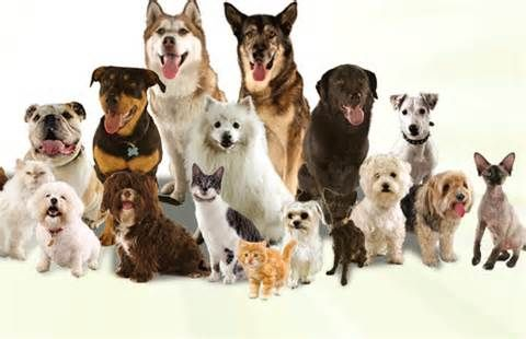 If You Have You Decided To Keep Pets On Home Please Consider These Things Before Getting A Pet Pets Dogs Pet Sitters