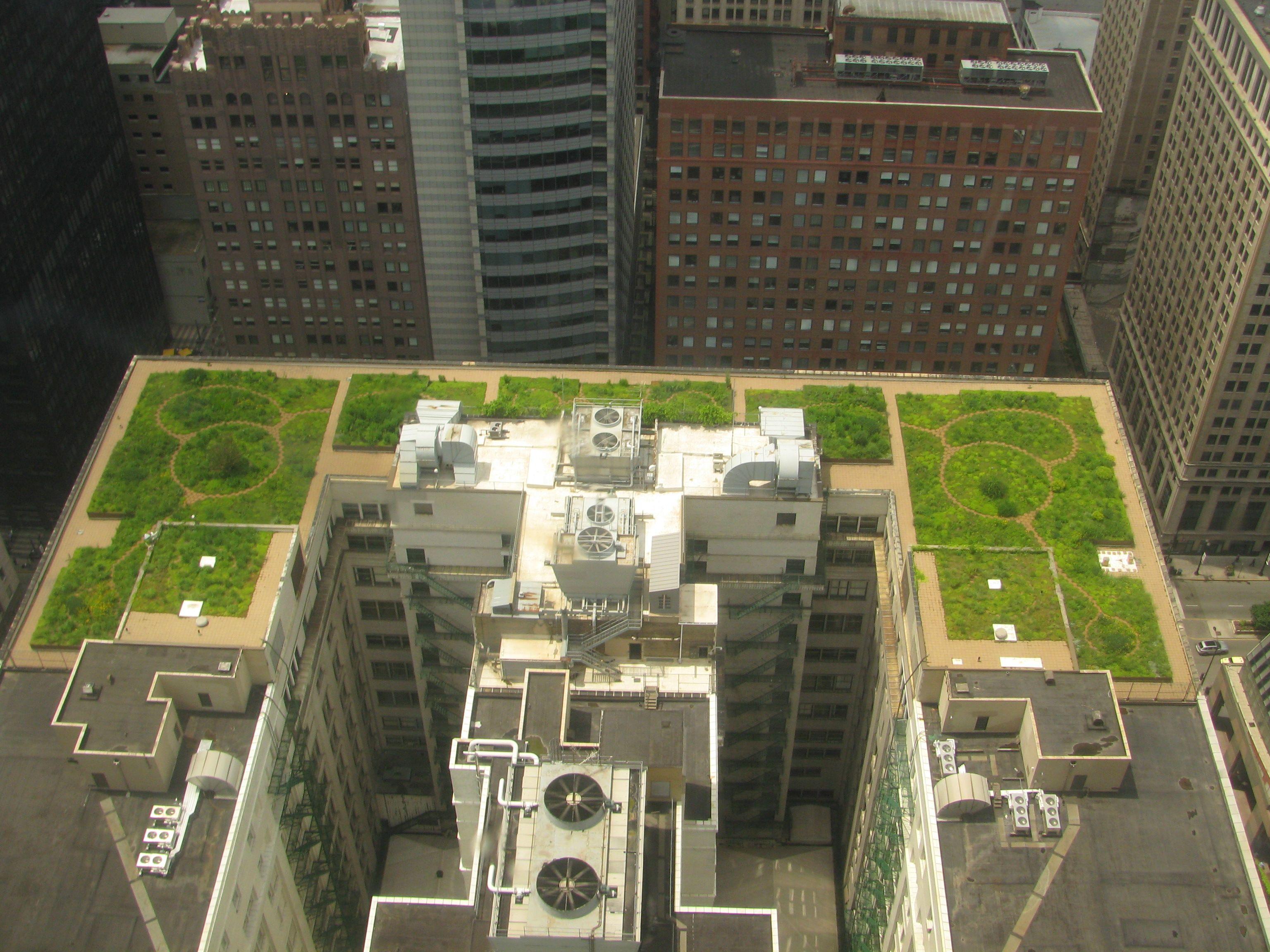 green roof (ახალი სიტყვა დენდროლოგიაში