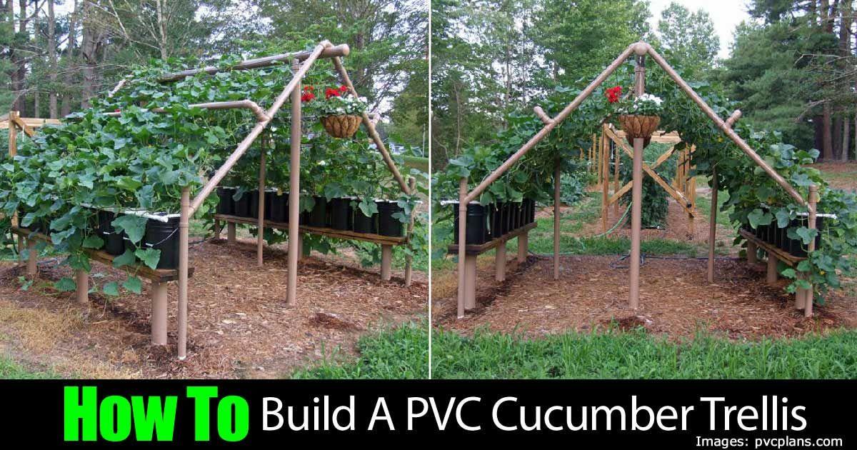 A pvc trellis can be used to grow a variety of vegetables such as cucumbers grapes or other - Build a garden trellis ideas ...