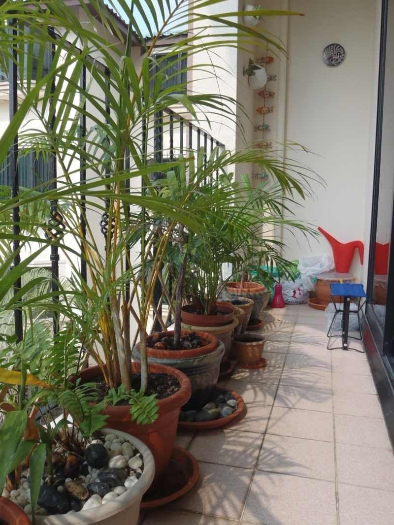 Sichtschutz für den Balkon Varianten aus Holz, Pflanzen