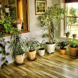 Other Indoor Plants | Indoor Plants | Pinterest | Indoor, Plants ...