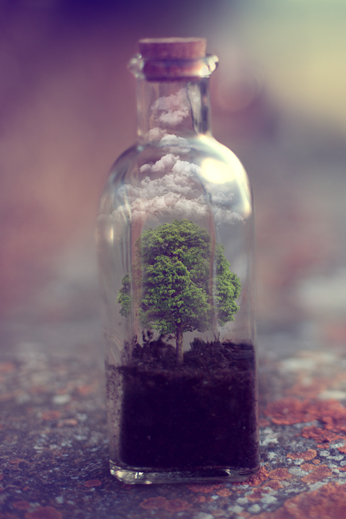 Bottle Cute Nature Photography Sweet Tree Tumblr Vintage