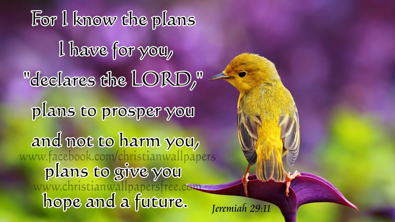 Download Hd New Year 2016 Bible Verse Greetings Card Wallpapers
