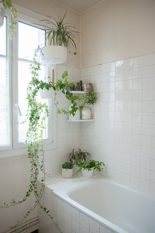 Bathroom Design Ideas For Your Home From Boldly Tiled Floors To Chandeliers These Beautiful Bathrooms Of Beautiful Bathrooms Amazing Bathrooms Bathroom Plants
