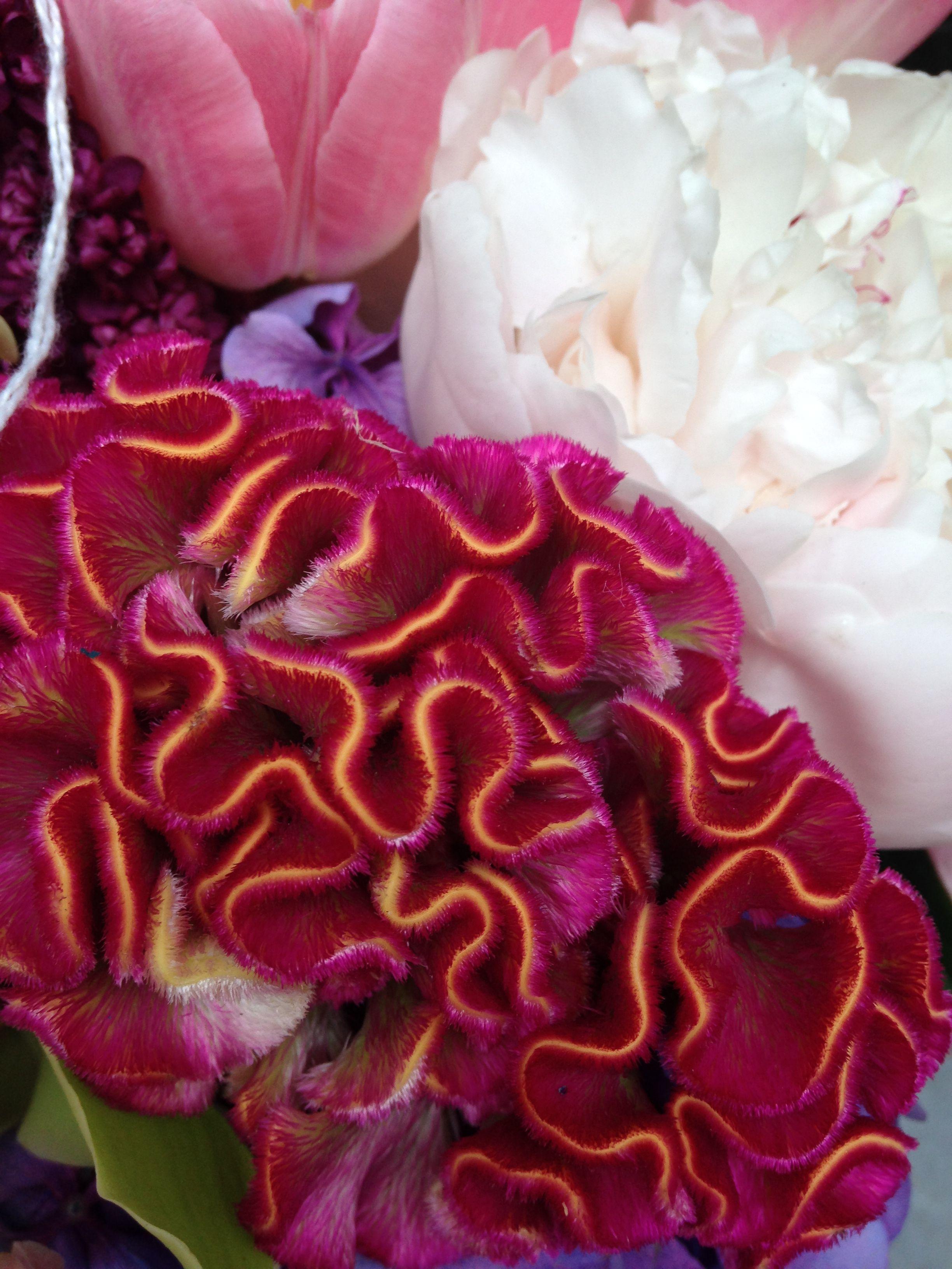pink weird fuzzy flower  Wedding flowers  Flowers