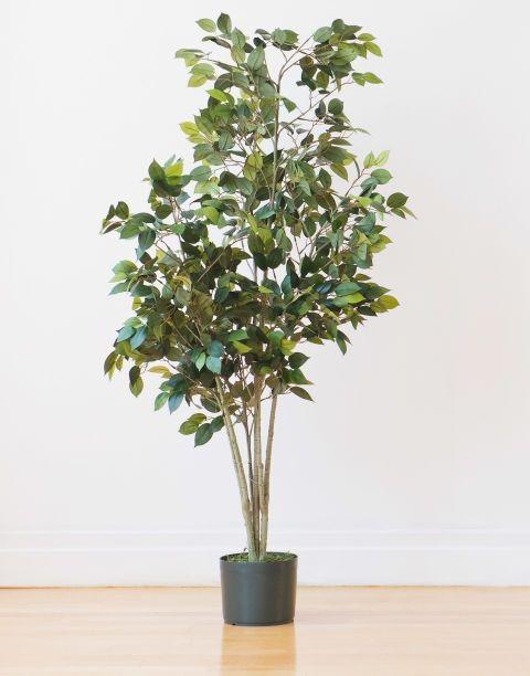 Zz Plant Ideas