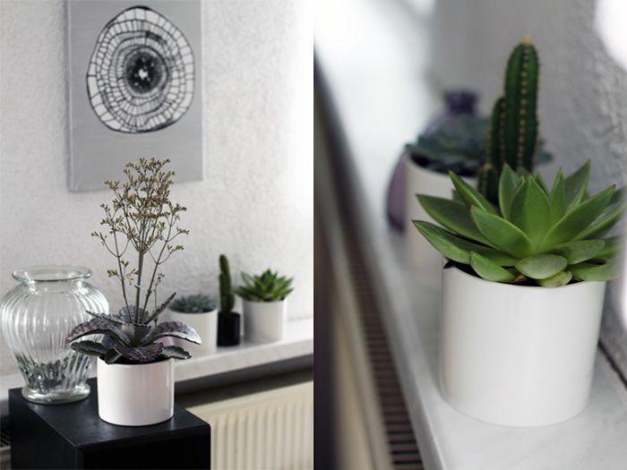 Pflanzen Wohnzimmer ~ Sukkulenten im wohnzimmer plants and flowers pinterest