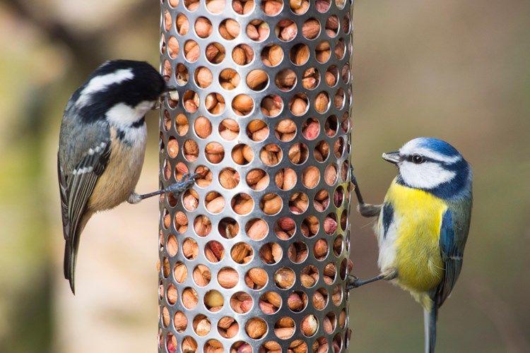 Feeding winter birds Birds, Winter bird, Wild birds
