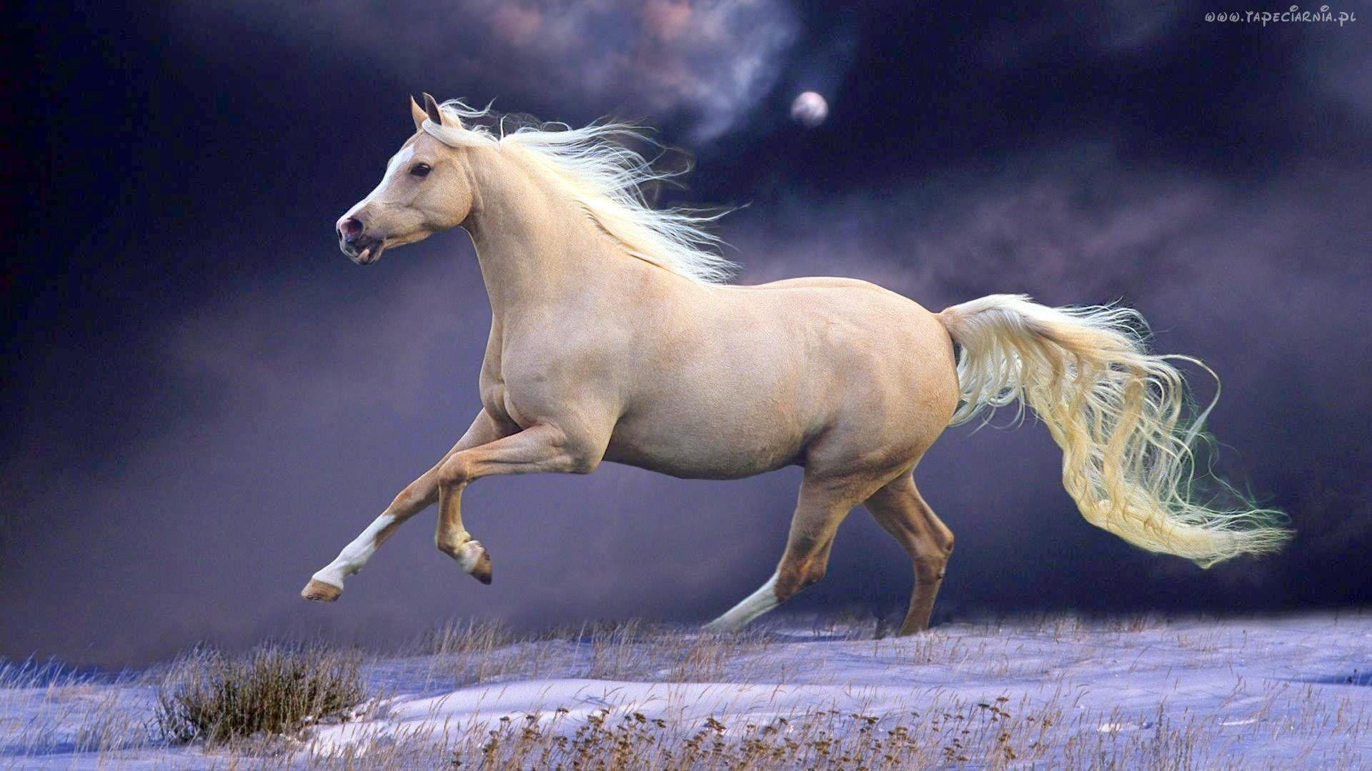 Koń Księżyc Chmury śnieg Horse Wallpaper Horses Horse Mane