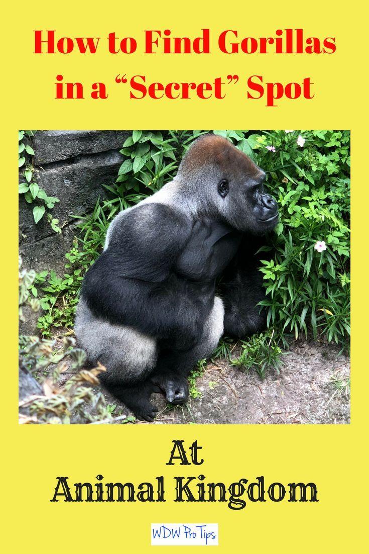 13+ How to watch animal kingdom ideas