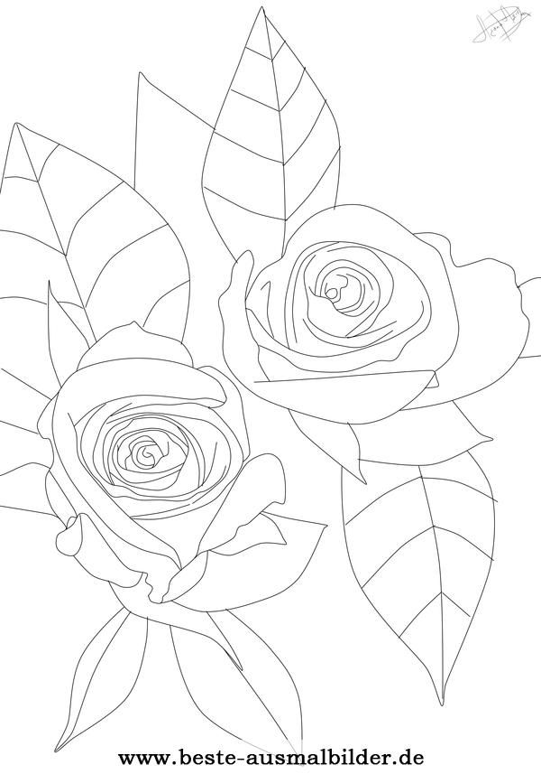 Ausmalbild Rosen Rosen Pinterest Colorful Flowers Flowers Und