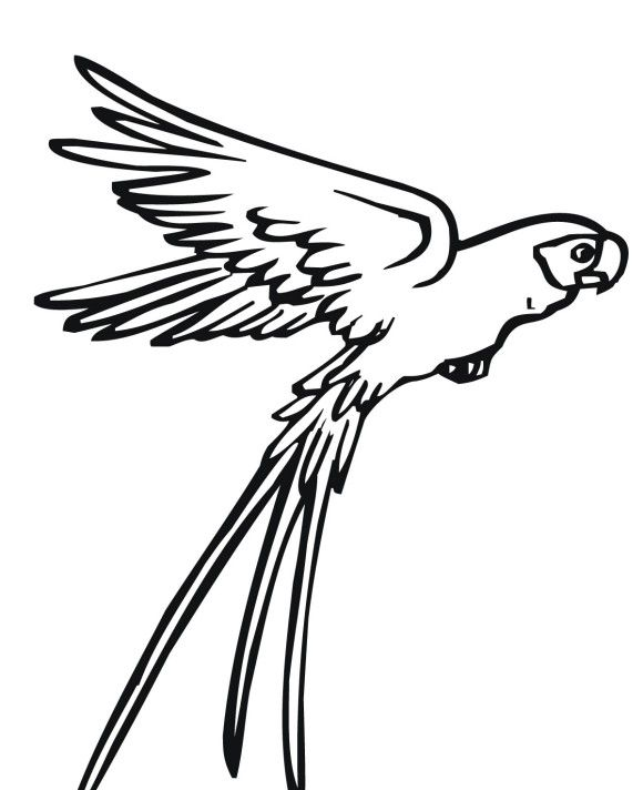 Flying Parrot Drawing Clipart Panda Free Clipart Images Parrot Drawing Animal Coloring Pages Bird Coloring Pages