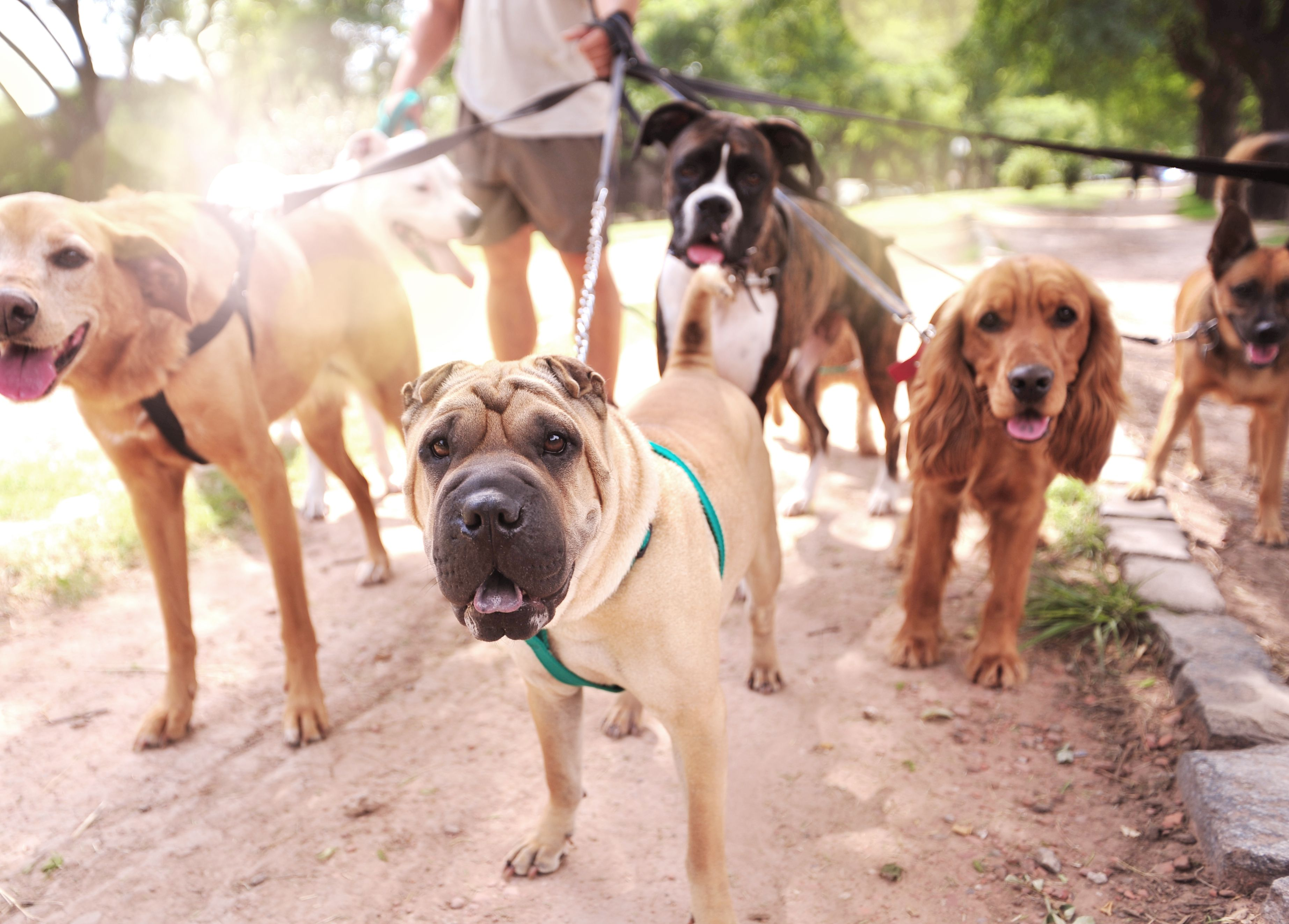 5 Facts You May Not Know About Lyme Disease In Dogs Rsdah Lyme Disease In Dogs Dog Walking Dog Walking Services