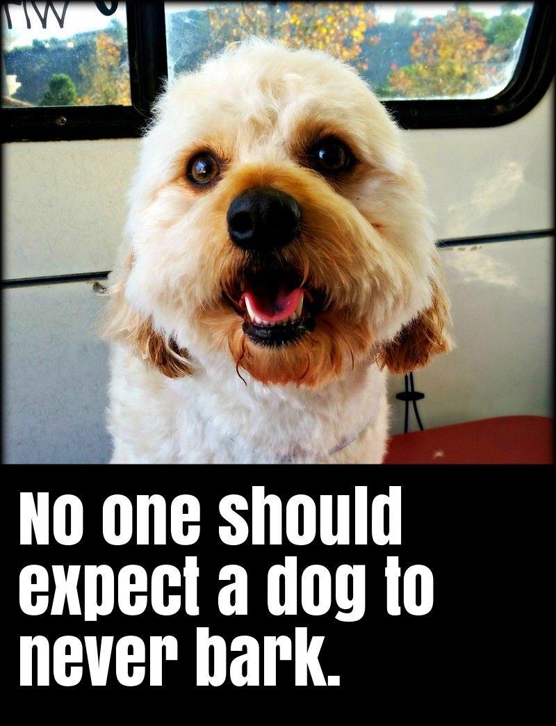 Why Dogs Barking Dog Barking Dog Training Dogs