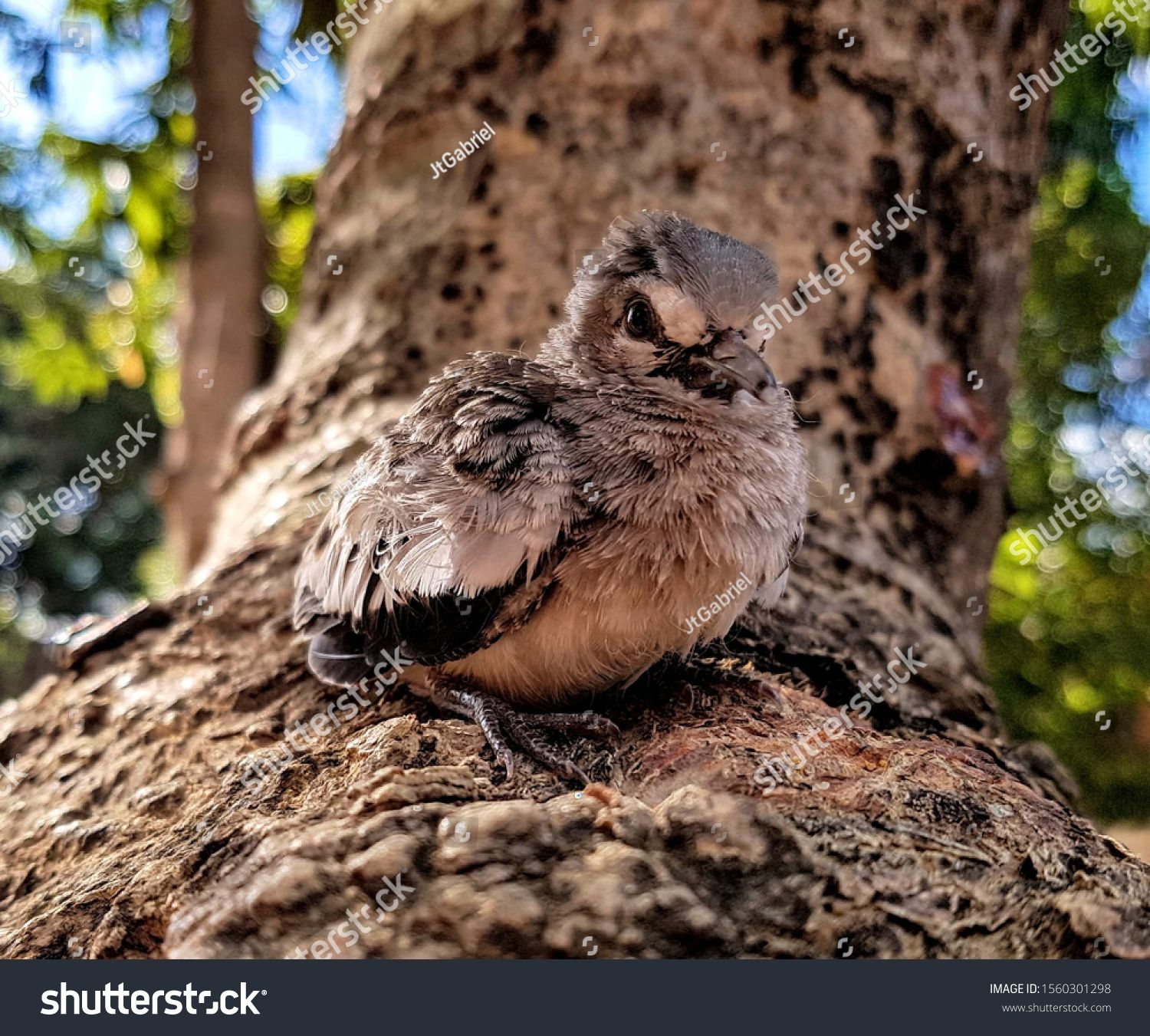 Little baby bird learning how to fly #Ad , #AD, #bird#baby ...
