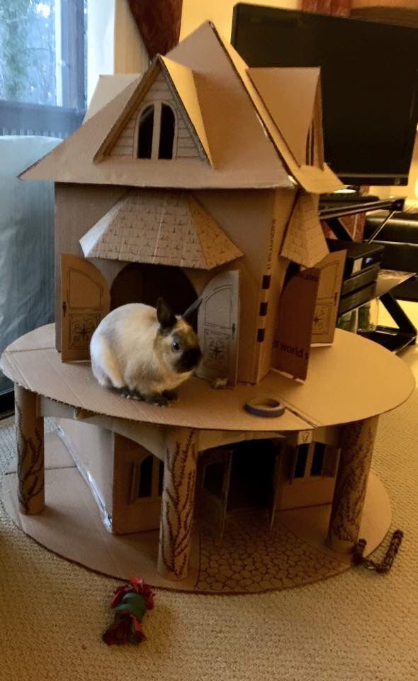 The Ultimate Bunny Castle Maison Lapin Cage Lapin Lapin Nain