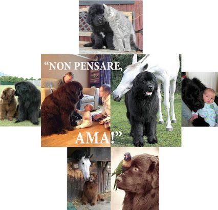 ANIMALI - Raccolte - Google+