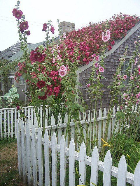Gardens of Hollyhocks and Roses | Charming Cottage Decor